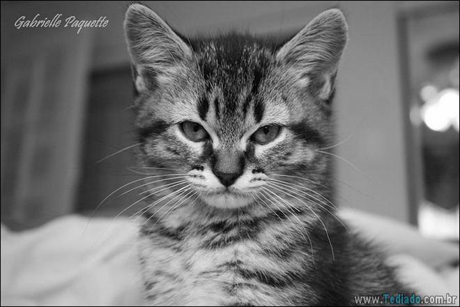 30 gatinhos muito irritados, que é difícil de levar à sério 27