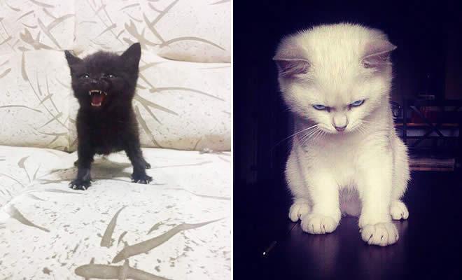 30 gatinhos muito irritados, que é difícil de levar à sério 3