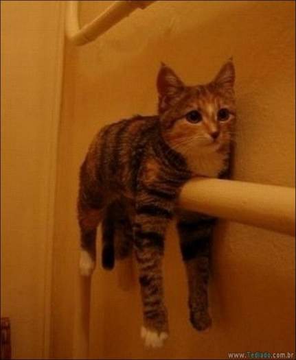 22 gatos fazendo coisas diferentes e estranhas 8