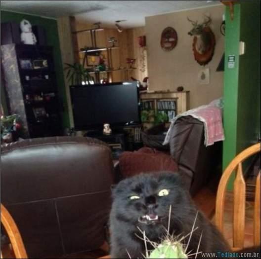 22 gatos fazendo coisas diferentes e estranhas 11