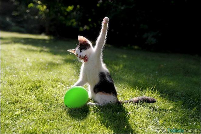 22 gatos fazendo coisas diferentes e estranhas 15