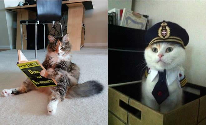 22 gatos fazendo coisas diferentes e estranhas 7