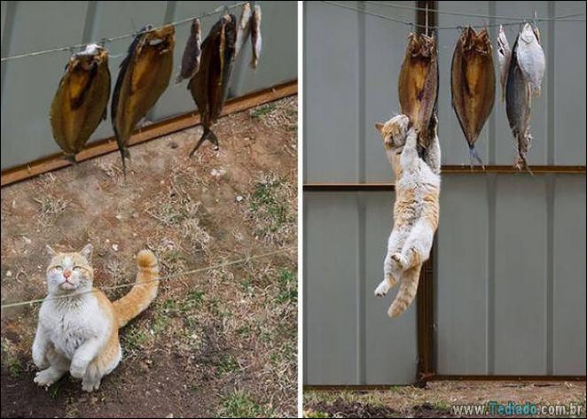 29 animais de estimação que foram pego no ato, mas eles não lamentam nada 9