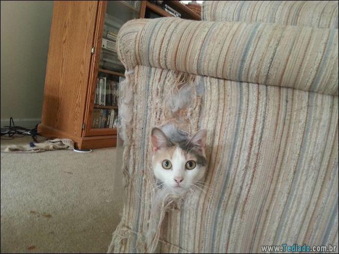 34 fotos de gatos em momentos muito diferente e estranho 4