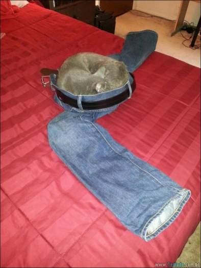 34 fotos de gatos em momentos muito diferente e estranho 6