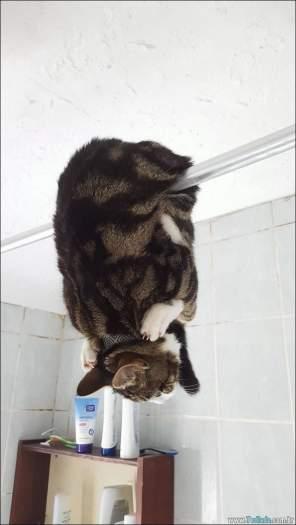 34 fotos de gatos em momentos muito diferente e estranho 8