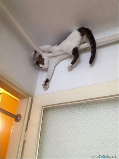 34 fotos de gatos em momentos muito diferente e estranho 10