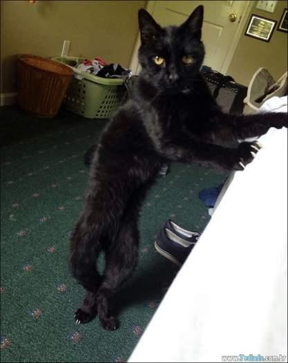 34 fotos de gatos em momentos muito diferente e estranho 16