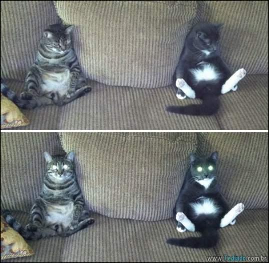 34 fotos de gatos em momentos muito diferente e estranho 18