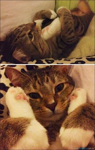 34 fotos de gatos em momentos muito diferente e estranho 20