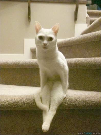 34 fotos de gatos em momentos muito diferente e estranho 23