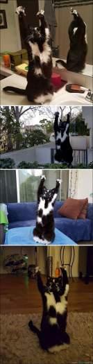 34 fotos de gatos em momentos muito diferente e estranho 25
