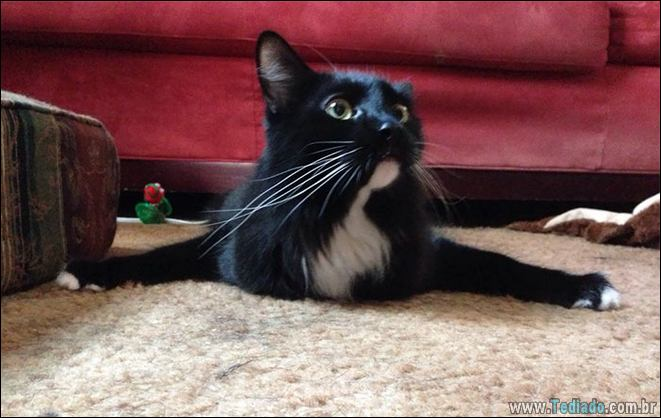 34 fotos de gatos em momentos muito diferente e estranho 27