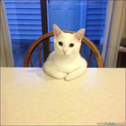 34 fotos de gatos em momentos muito diferente e estranho 29