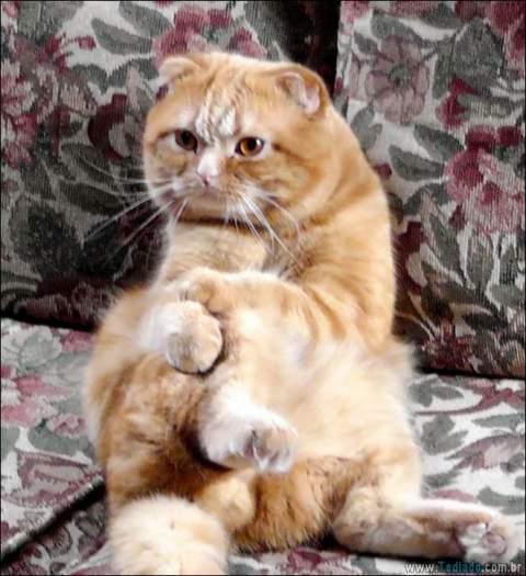 34 fotos de gatos em momentos muito diferente e estranho 32