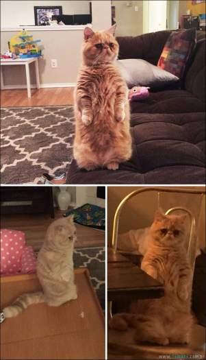 34 fotos de gatos em momentos muito diferente e estranho 35