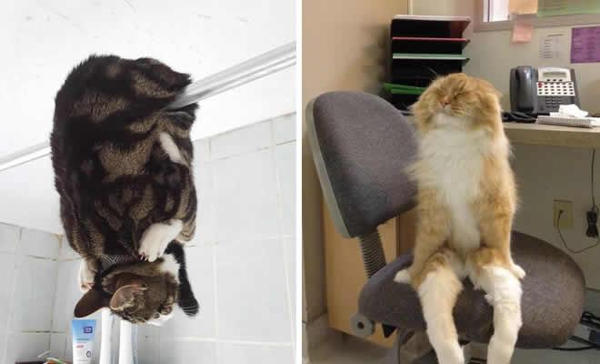 34 fotos de gatos em momentos muito diferente e estranho 3