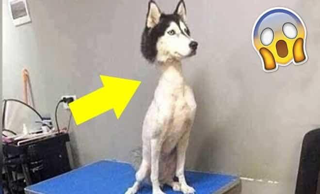 5 coisas horríveis feitas com animais de estimação 7