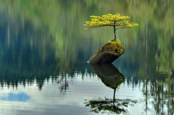 30 árvores que se recusam a morrer, não importa o que acontece 3