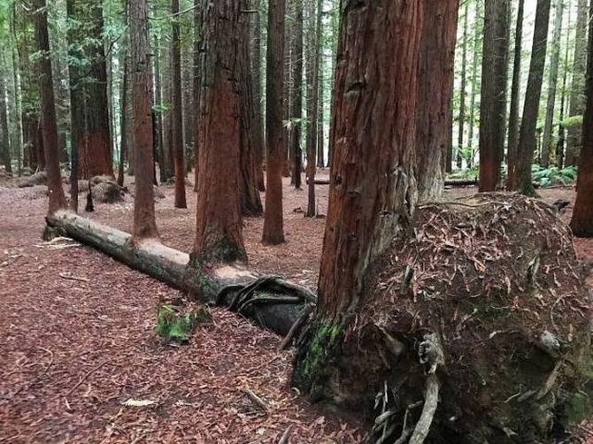 30 árvores que se recusam a morrer, não importa o que acontece 4
