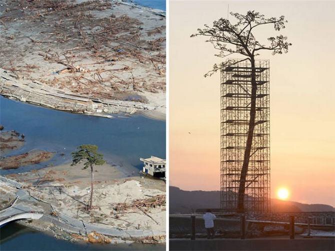 30 árvores que se recusam a morrer, não importa o que acontece 5