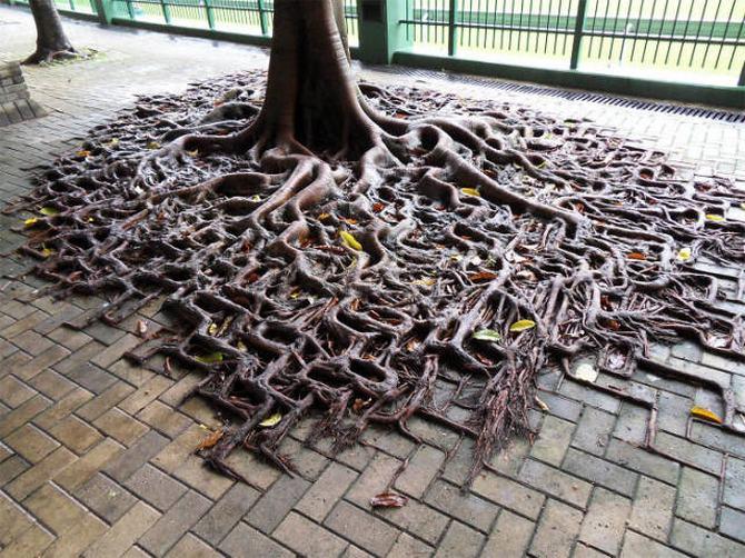 30 árvores que se recusam a morrer, não importa o que acontece 6