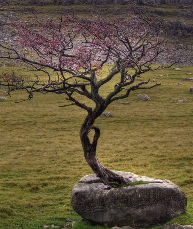 30 árvores que se recusam a morrer, não importa o que acontece 9