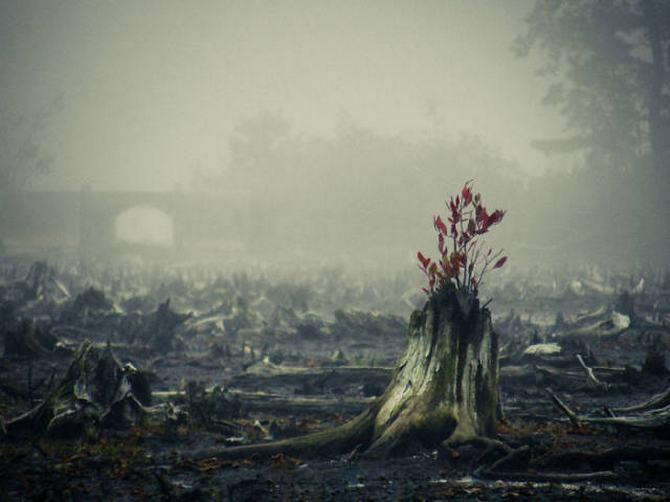 30 árvores que se recusam a morrer, não importa o que acontece 17