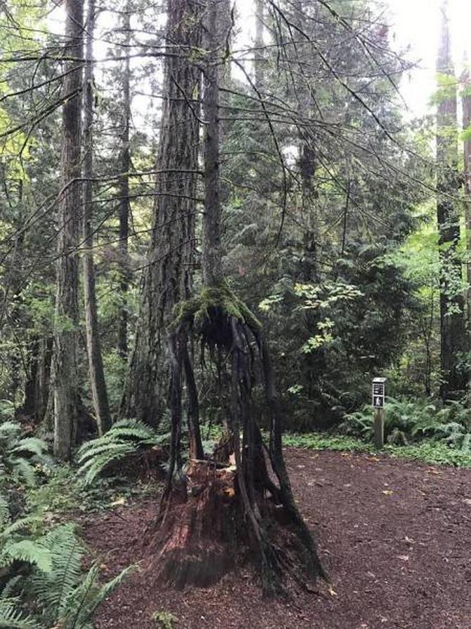 30 árvores que se recusam a morrer, não importa o que acontece 19