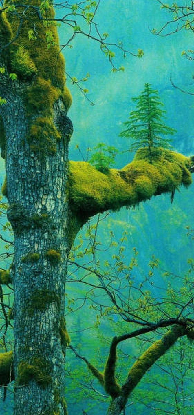 30 árvores que se recusam a morrer, não importa o que acontece 20