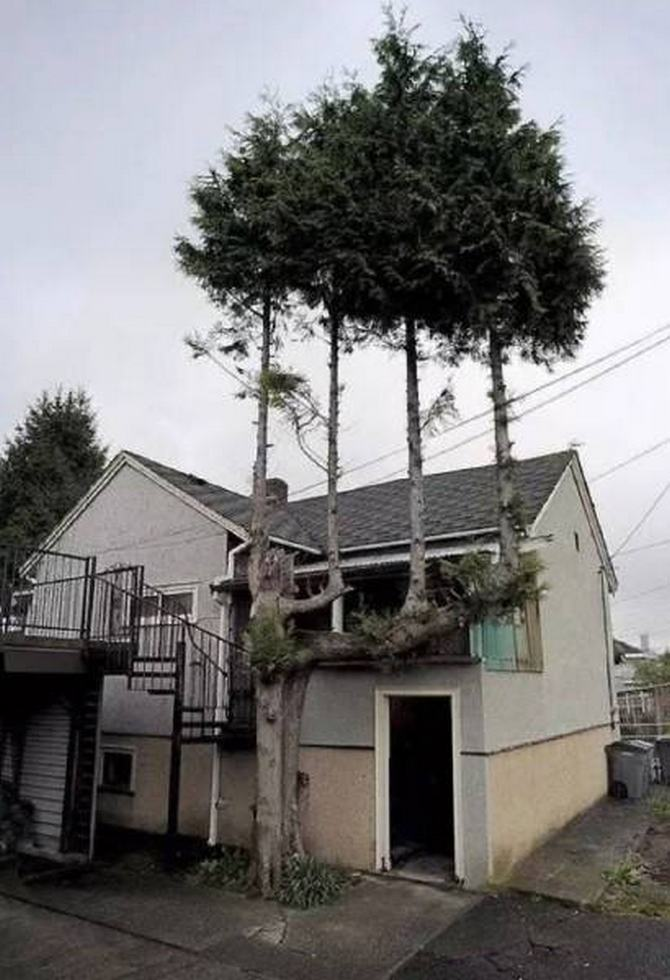 30 árvores que se recusam a morrer, não importa o que acontece 22