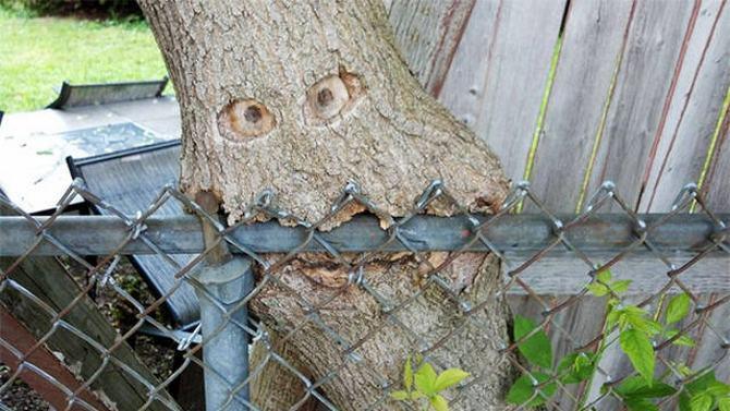 30 árvores que se recusam a morrer, não importa o que acontece 23