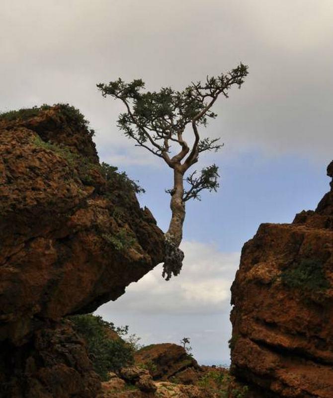 30 árvores que se recusam a morrer, não importa o que acontece 26