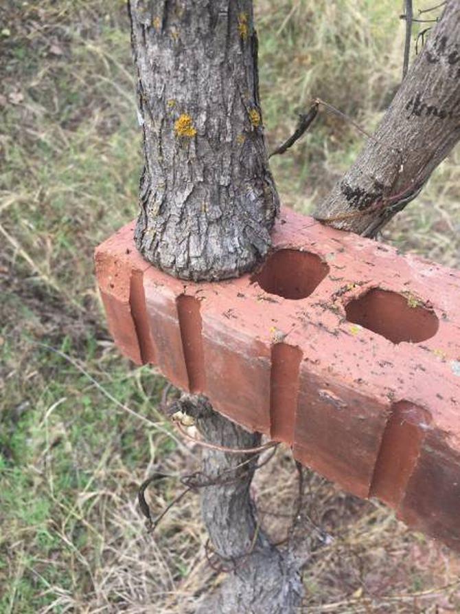 30 árvores que se recusam a morrer, não importa o que acontece 31
