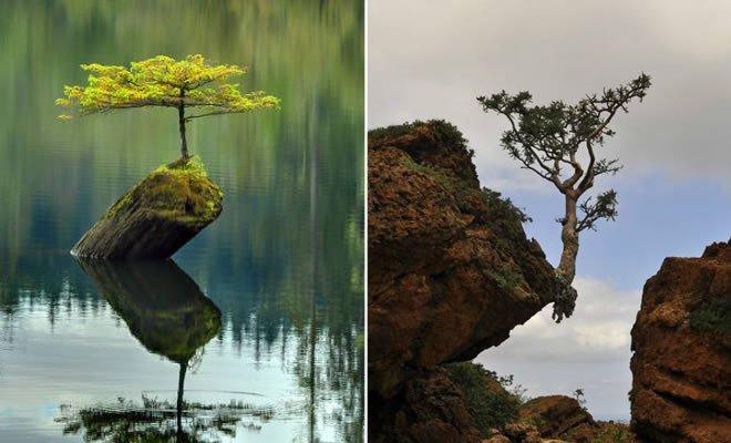 30 árvores que se recusam a morrer, não importa o que acontece 67