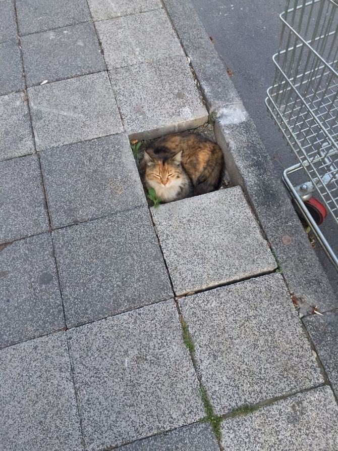 31 provas que gatos adora, ama lugares pequenos 2