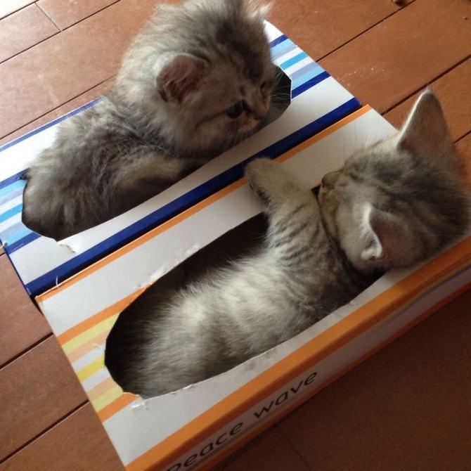 31 provas que gatos adora, ama lugares pequenos 7