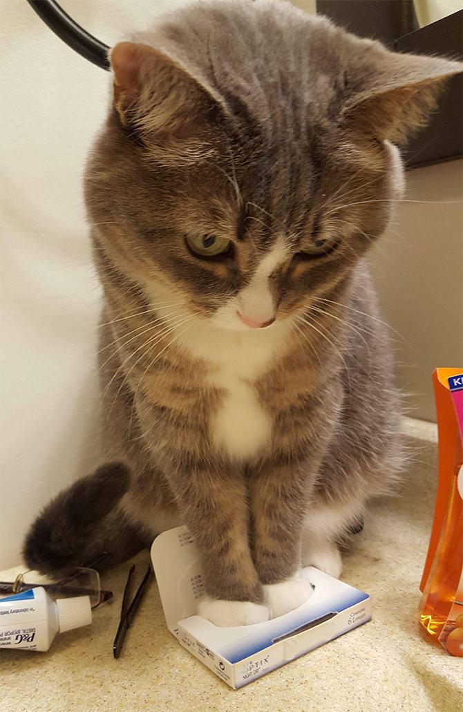 31 provas que gatos adora, ama lugares pequenos 10