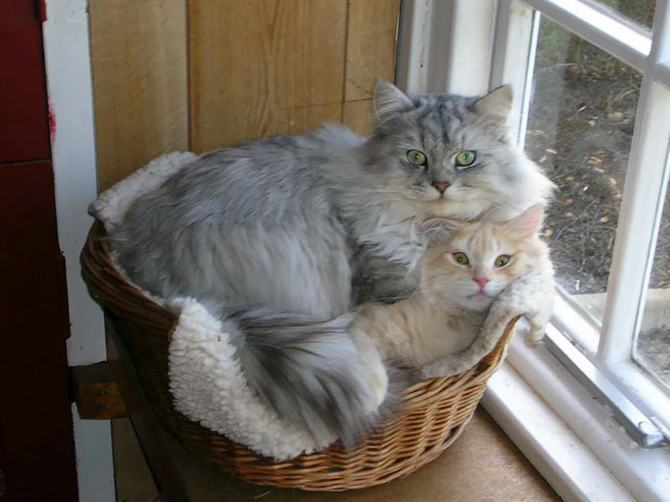 31 provas que gatos adora, ama lugares pequenos 12