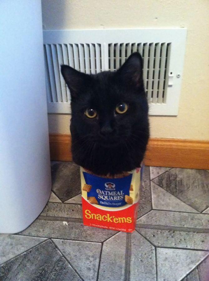 31 provas que gatos adora, ama lugares pequenos 13