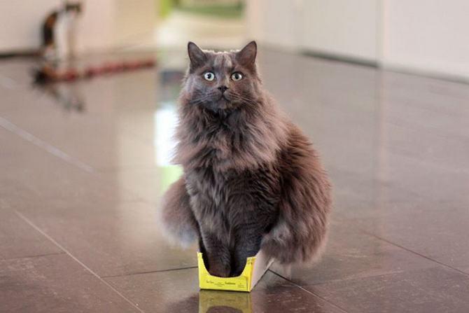 31 provas que gatos adora, ama lugares pequenos 16
