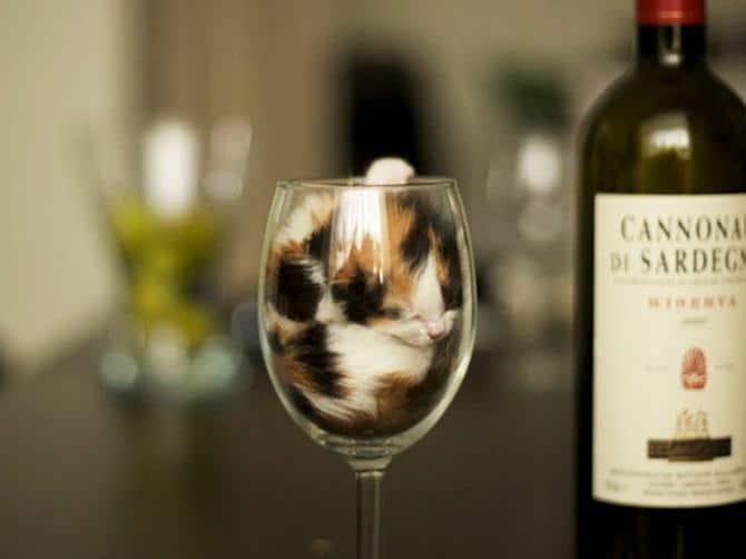 31 provas que gatos adora, ama lugares pequenos 18