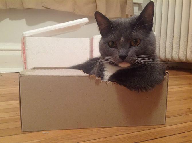 31 provas que gatos adora, ama lugares pequenos 19