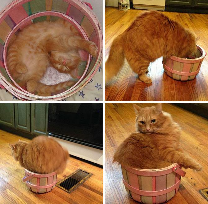 31 provas que gatos adora, ama lugares pequenos 20