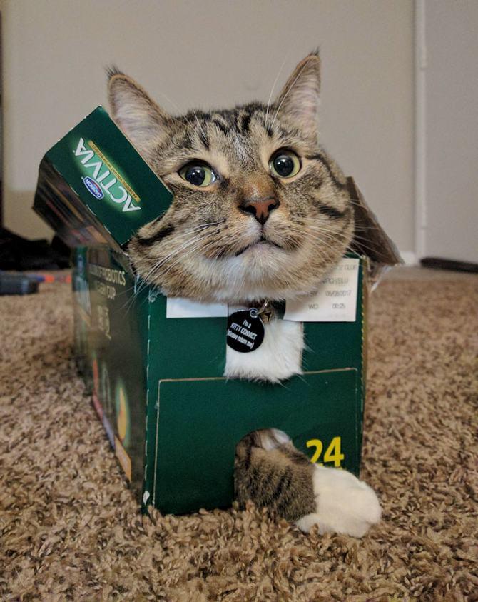 31 provas que gatos adora, ama lugares pequenos 23