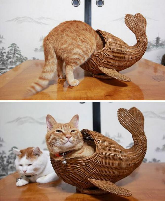 31 provas que gatos adora, ama lugares pequenos 25