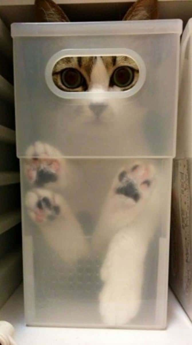 31 provas que gatos adora, ama lugares pequenos 26