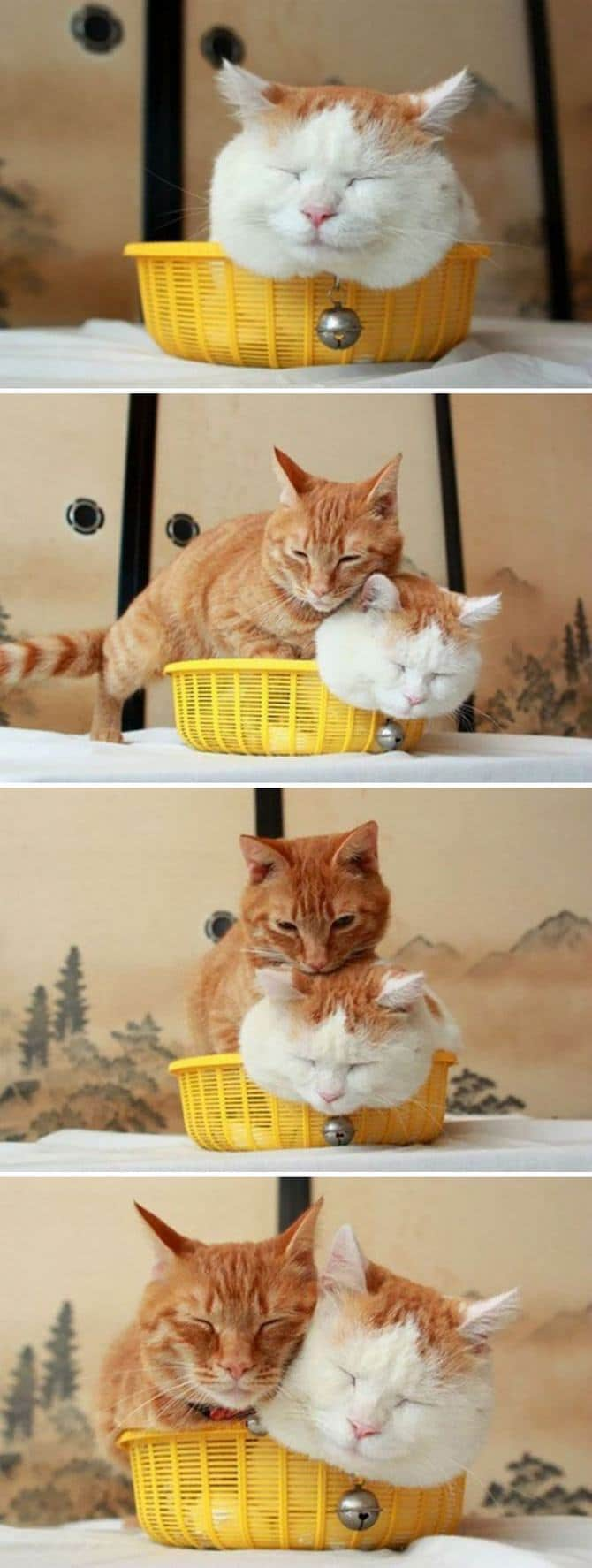 31 provas que gatos adora, ama lugares pequenos 28