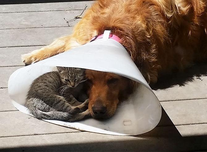 31 provas que gatos adora, ama lugares pequenos 29