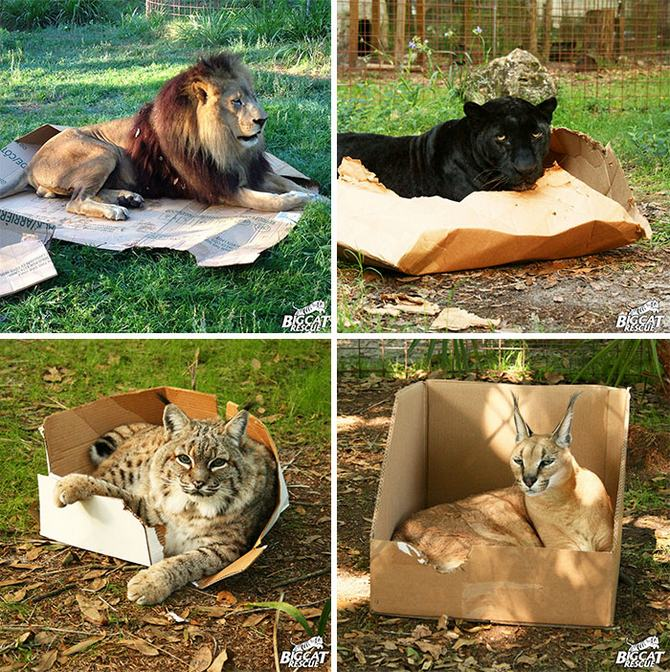 31 provas que gatos adora, ama lugares pequenos 30